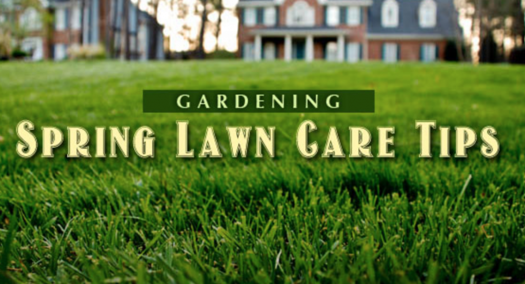 The Best Lawn