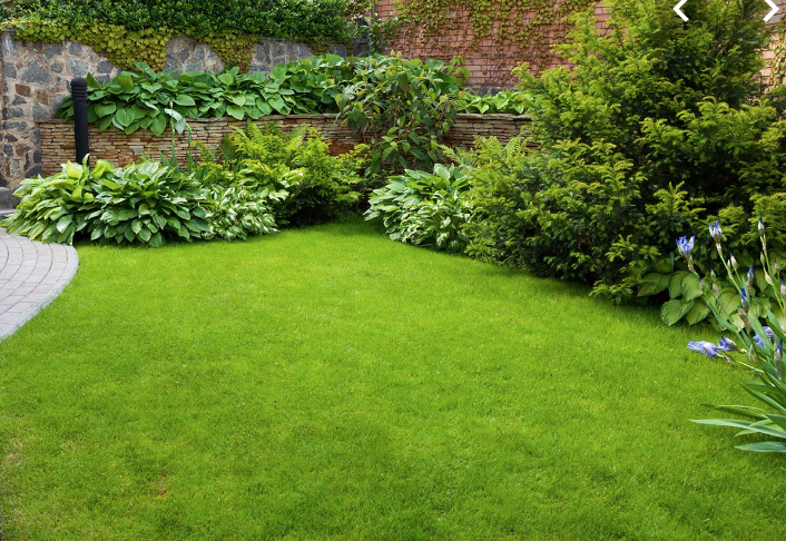 Organic Lawn Care For Your Lawn