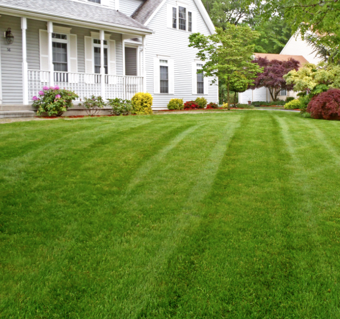 early spring effects your lawn in the summer